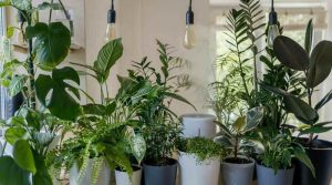 5 Best Humidifiers for Plants
